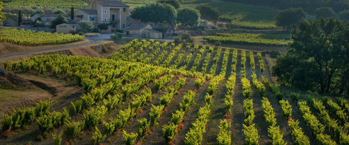 Le vignoble- Font Alba